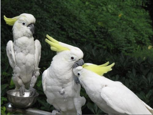 观赏鸟贸易及繁育